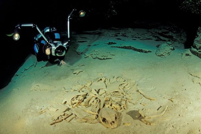 Tận thấy nghĩa địa rùa trong hang động bí ẩn dưới đáy biển - 1