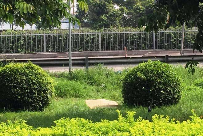 Cô gái trẻ chết bí ẩn trên bãi cỏ trong công viên - 1