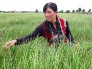 Thị trường - Tiêu dùng - Trồng cây tiền tỷ: Nghề trồng kiệu thu lãi 200-300 triệu đồng/ha