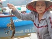 Thị trường - Tiêu dùng - Phú Yên: Tôm hùm chết dọc bãi biển, thiệt hại trên trăm tỷ đồng