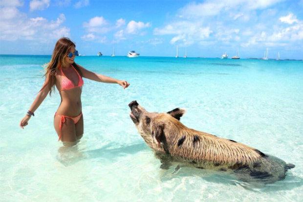 Cô gái Đức mặc bikini hối hận vì chụp ảnh cùng đàn cá mập - 1