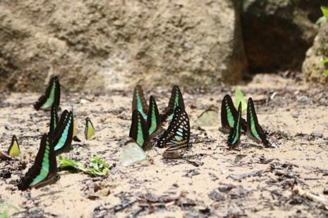 """""""Thiên đường bướm"""" đẹp mê hồn ở Đắk Lắk - 2"""