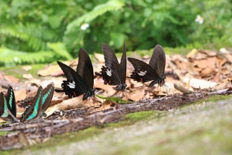 """""""Thiên đường bướm"""" đẹp mê hồn ở Đắk Lắk - 1"""