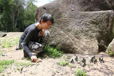 """""""Thiên đường bướm"""" đẹp mê hồn ở Đắk Lắk - 15"""