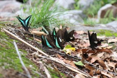 """""""Thiên đường bướm"""" đẹp mê hồn ở Đắk Lắk - 12"""