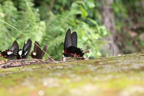 """""""Thiên đường bướm"""" đẹp mê hồn ở Đắk Lắk - 13"""