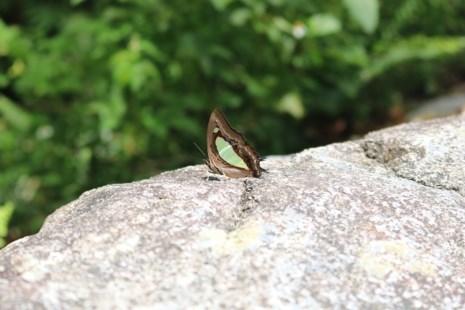 """""""Thiên đường bướm"""" đẹp mê hồn ở Đắk Lắk - 11"""