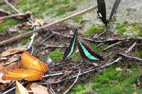 """""""Thiên đường bướm"""" đẹp mê hồn ở Đắk Lắk - 9"""