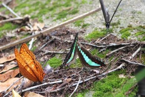 """""""Thiên đường bướm"""" đẹp mê hồn ở Đắk Lắk - 10"""