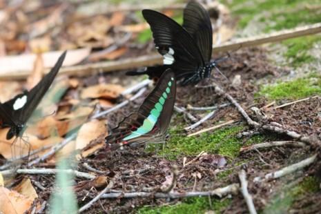 """""""Thiên đường bướm"""" đẹp mê hồn ở Đắk Lắk - 7"""