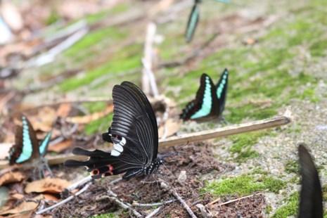 """""""Thiên đường bướm"""" đẹp mê hồn ở Đắk Lắk - 8"""
