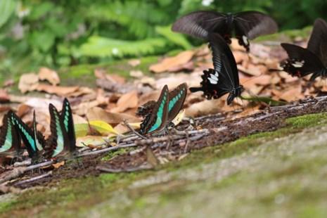 """""""Thiên đường bướm"""" đẹp mê hồn ở Đắk Lắk - 6"""
