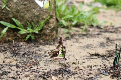 """""""Thiên đường bướm"""" đẹp mê hồn ở Đắk Lắk - 5"""