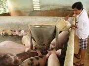 Thị trường - Tiêu dùng - Giá heo rẻ bèo, thức ăn chăn nuôi vẫn nhập ồ ạt