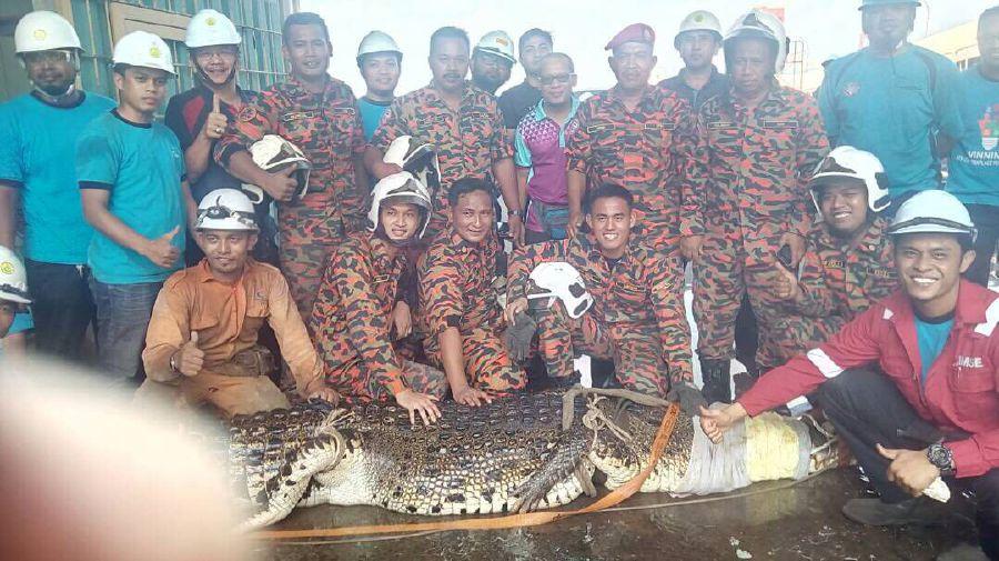 11 tiếng vật lộn để tóm cá sấu khổng lồ 1 tấn ở Malaysia - 3