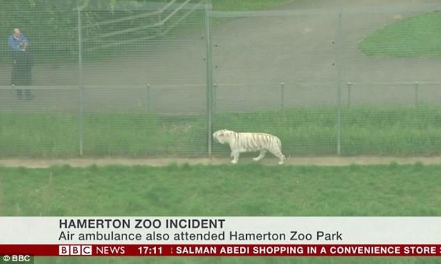 Hổ trắng cắn chết nhân viên vườn thú gây chấn động Anh - 2