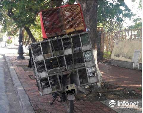 Quảng Bình: Lạ lùng chuyện mua chim trên cây - 2