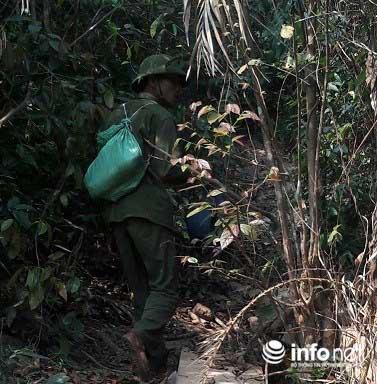 Quảng Bình: Lạ lùng chuyện mua chim trên cây - 3