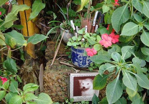 Nghĩa trang chó mèo độc nhất Hà Nội - 6
