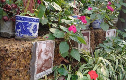 Nghĩa trang chó mèo độc nhất Hà Nội - 9