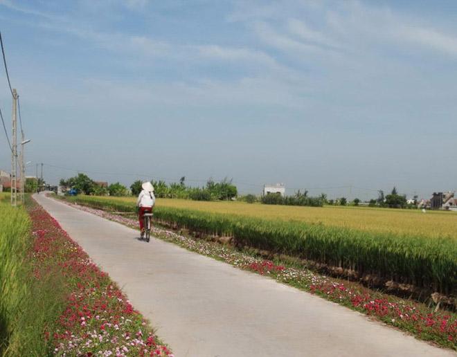 Ngỡ ngàng những con đường làng rực rỡ sắc hoa - 3