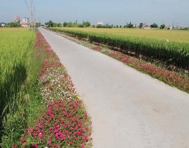 Ngỡ ngàng những con đường làng rực rỡ sắc hoa - 1