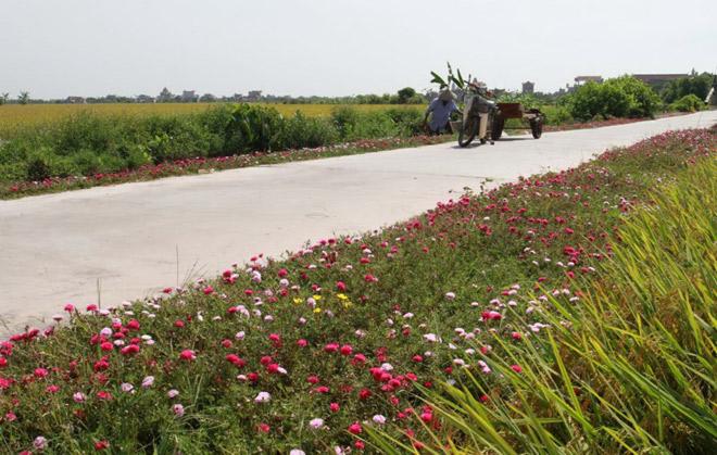 Ngỡ ngàng những con đường làng rực rỡ sắc hoa - 5