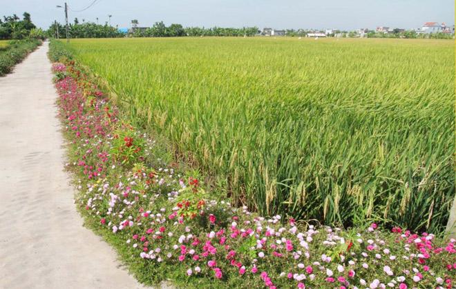 Ngỡ ngàng những con đường làng rực rỡ sắc hoa - 8
