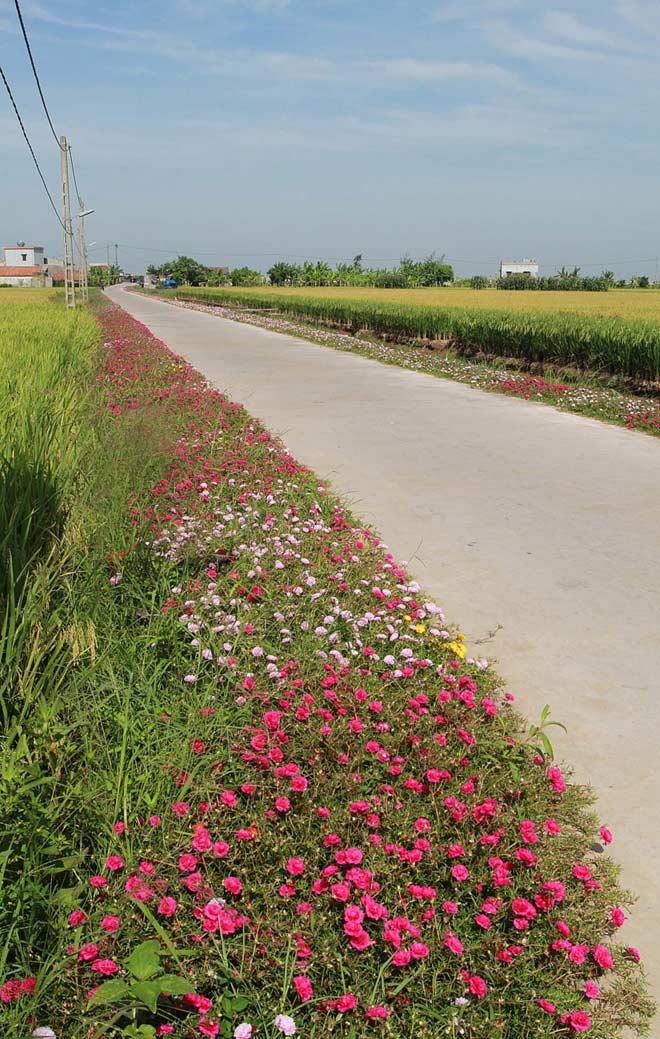 Ngỡ ngàng những con đường làng rực rỡ sắc hoa - 7
