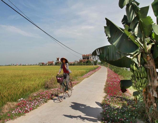 Ngỡ ngàng những con đường làng rực rỡ sắc hoa - 9