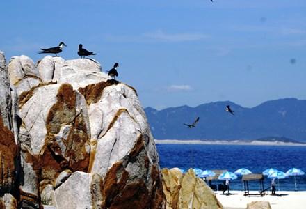 Đảo yến Hòn Nội và bãi tắm đôi có một không hai - 6