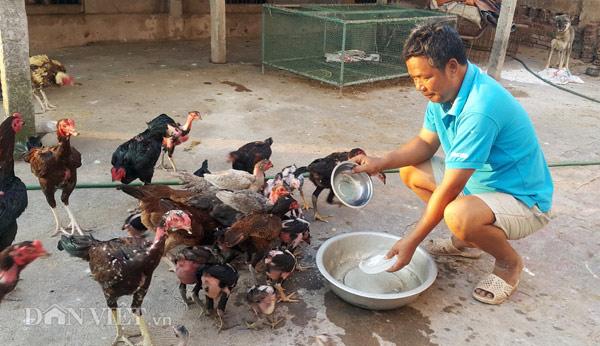Nhà nông cho gà uống nước đá lạnh để chống nắng nóng 41 độ C - 5