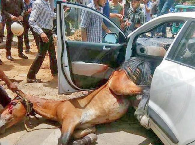 Ấn Độ: Nắng dữ dội, ngựa lao qua kính chui tọt vào xe hơi - 2