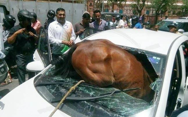 Ấn Độ: Nắng dữ dội, ngựa lao qua kính chui tọt vào xe hơi - 1