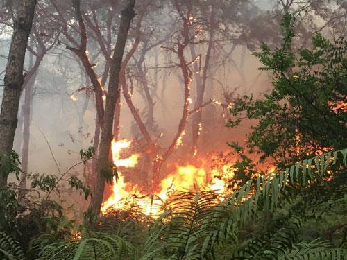 HN: Cháy lớn rừng phòng hộ Sóc Sơn, huy động 2000 người dập lửa - 2
