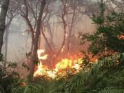 Tin tức trong ngày - HN: Cháy lớn rừng phòng hộ Sóc Sơn, huy động 2000 người dập lửa