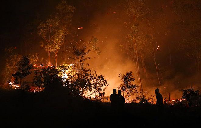 Hiện trường vụ cháy rừng lớn nhất lịch sử ở Sóc Sơn - 5