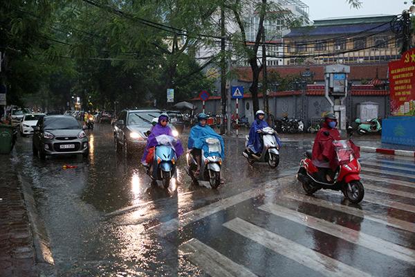 """Ảnh: Người Hà Nội sung sướng đi dưới """"mưa vàng"""" - 15"""