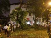Tin tức trong ngày - HN: Cành cây cổ thụ đè trúng 2 người sau trận cuồng phong
