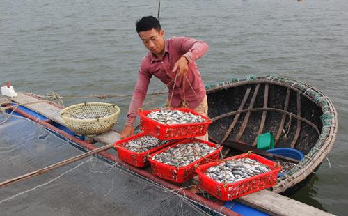 Bỏ lương 9 triệu về làng nuôi cá lồng muốn lãi 200 triệu/năm - 1