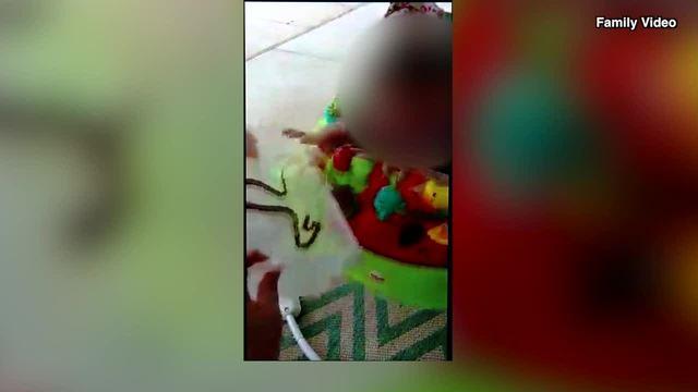 """Bà mẹ Mỹ cho rắn cắn con một tuổi để dạy """"bài học"""" - 1"""