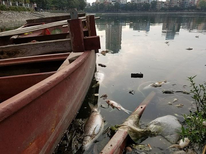 HN: Tròn 1 năm, cá lại chết trắng hồ Hoàng Cầu - 6
