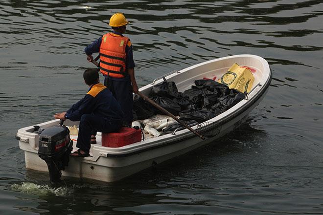 HN: Tròn 1 năm, cá lại chết trắng hồ Hoàng Cầu - 4