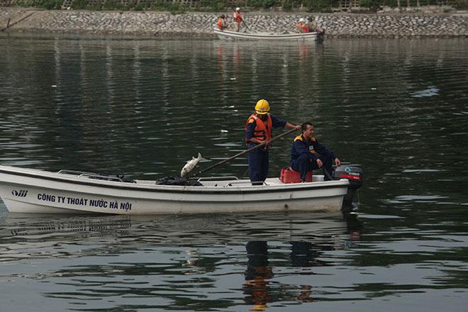 HN: Tròn 1 năm, cá lại chết trắng hồ Hoàng Cầu - 5