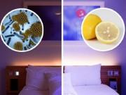 Sức khỏe đời sống - Đây là lý do người Nhật luôn để vài lát chanh trong phòng ngủ