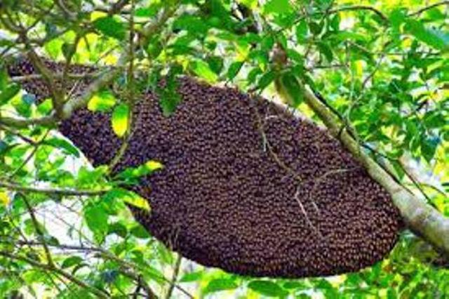 Thắp hương trong nghĩa địa, 14 người bị ong đốt nhập viện - 1