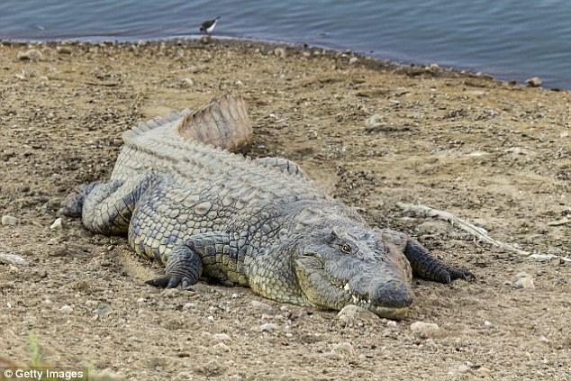 Cô gái Ấn Độ bị cá sấu bắt đi biệt tăm trước mặt gia đình - 1