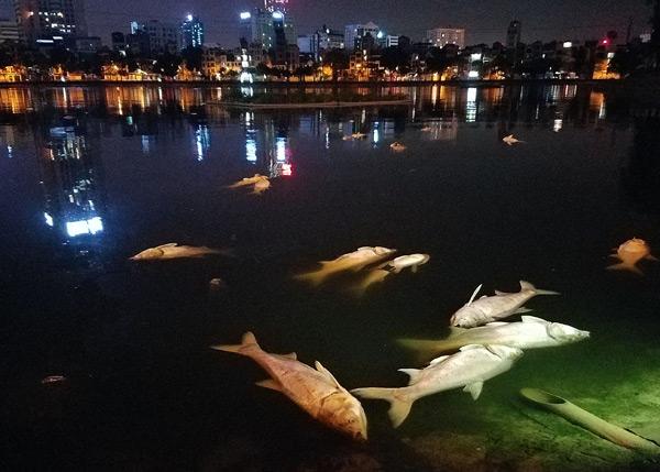 Đã tìm ra nguyên nhân cá chết trắng ở hồ Hoàng Cầu - 1