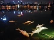 Đã tìm ra nguyên nhân cá chết trắng ở hồ Hoàng Cầu