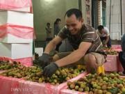 Thị trường - Tiêu dùng - Vải thiều được mùa kỷ lục: Nông dân ước thu 700 tỷ đồng